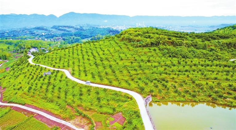 100亩果园规划设计图